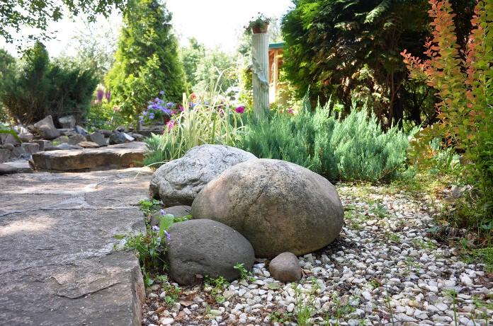 На нашей даче десять соток и растет много цветов, хвойников, декоративных кустарников, берез