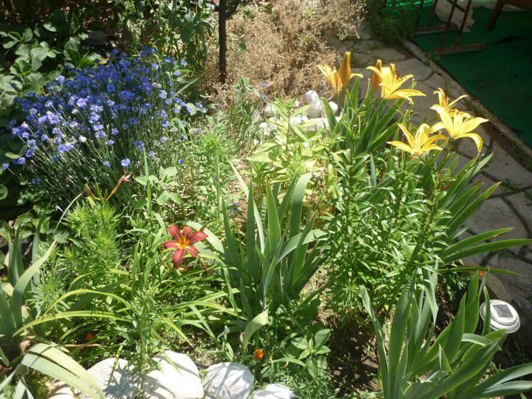 Цветов море, сад и огород.много винограда. В общем место для тела и души