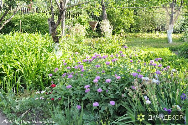 Райский уголок Ольги (29 фото)