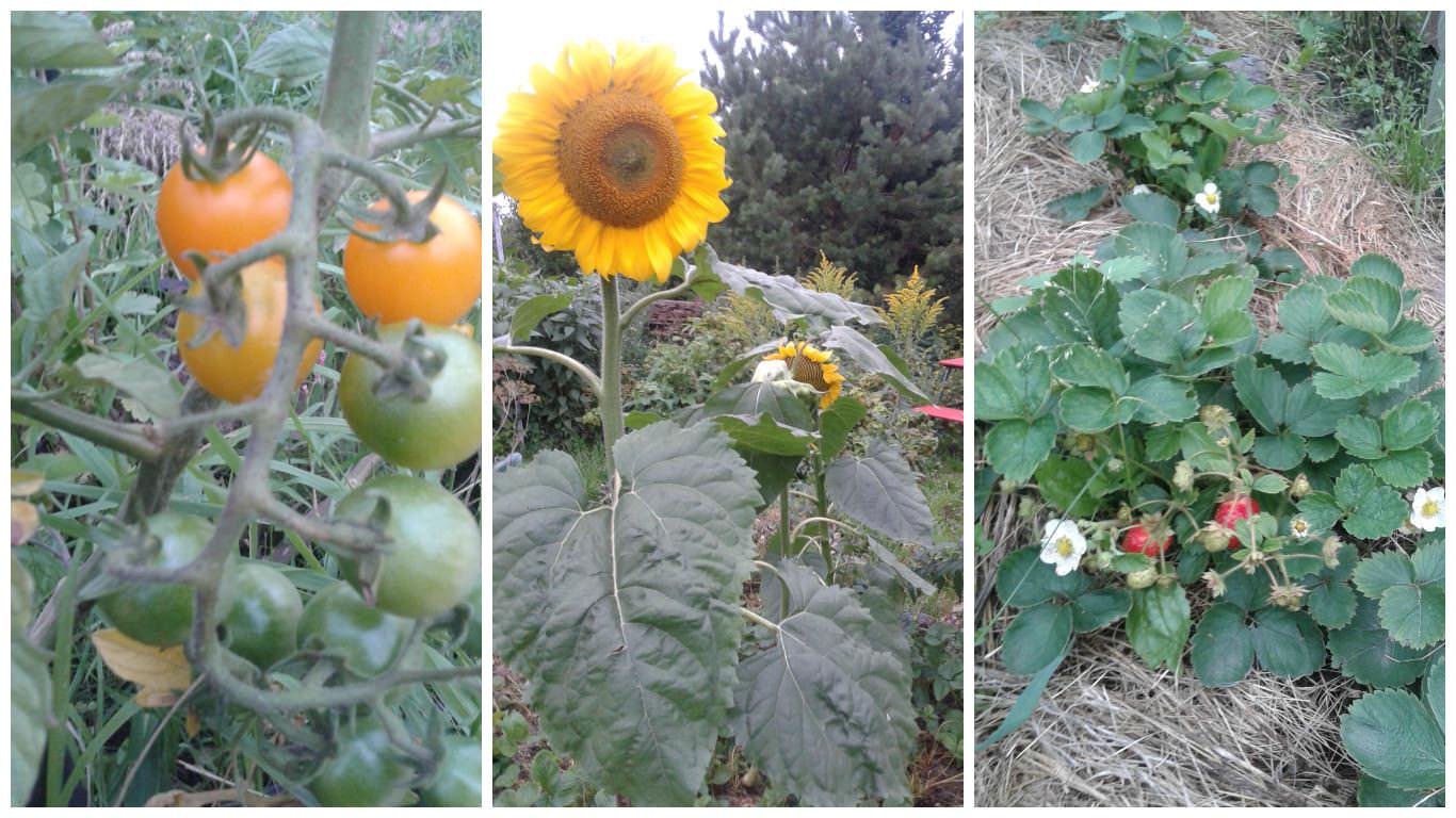 Сейчас любуюсь грядками и цветником и думаю: «Какая красота!»