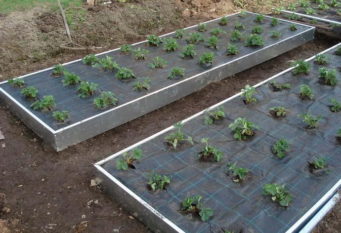 Посадка овощных, ягодных культур и зелени должна осуществляться в соответствии с технологией выращивания