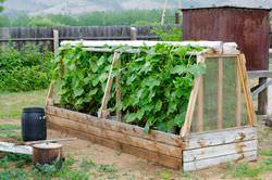 Почти каждый огородный участок оснащен тепличным сооружением для огурцов