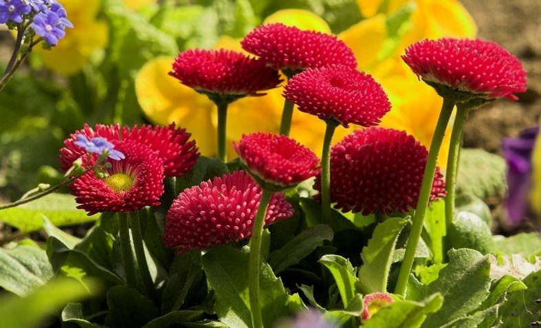 Важно помнить, что это растение хоть и маленькое, но внимания к себе требует большого