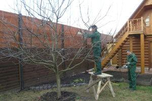 Обрезка больших деревьев