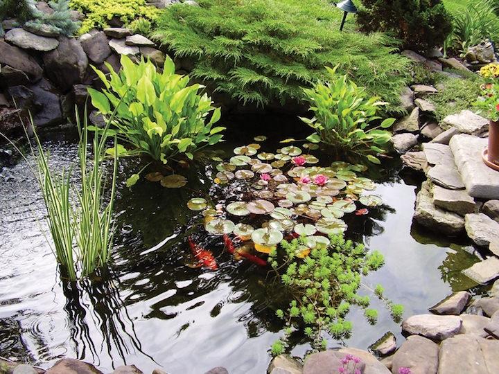 Если вы — счастливый обладатель роскошного сада с искусственным водоемом, тогда для вас весенняя уборка является очень ответственным занятием
