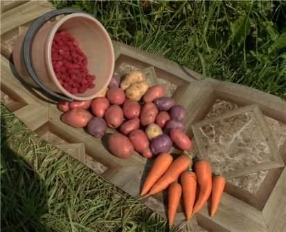 Преждевременное определение урожая в погреб — главная ошибка дачников!