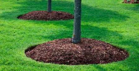 Обязательно производите мульчирование молодого сада перед холодным сезоном