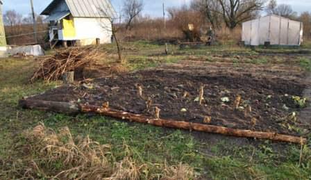 Не оставляйте почву на грядках голой после уборки урожая, это вредно!