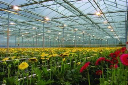Специалисты рекомендуют использовать для освещения теплиц специальные лампы, обладающие необходимыми свойствами