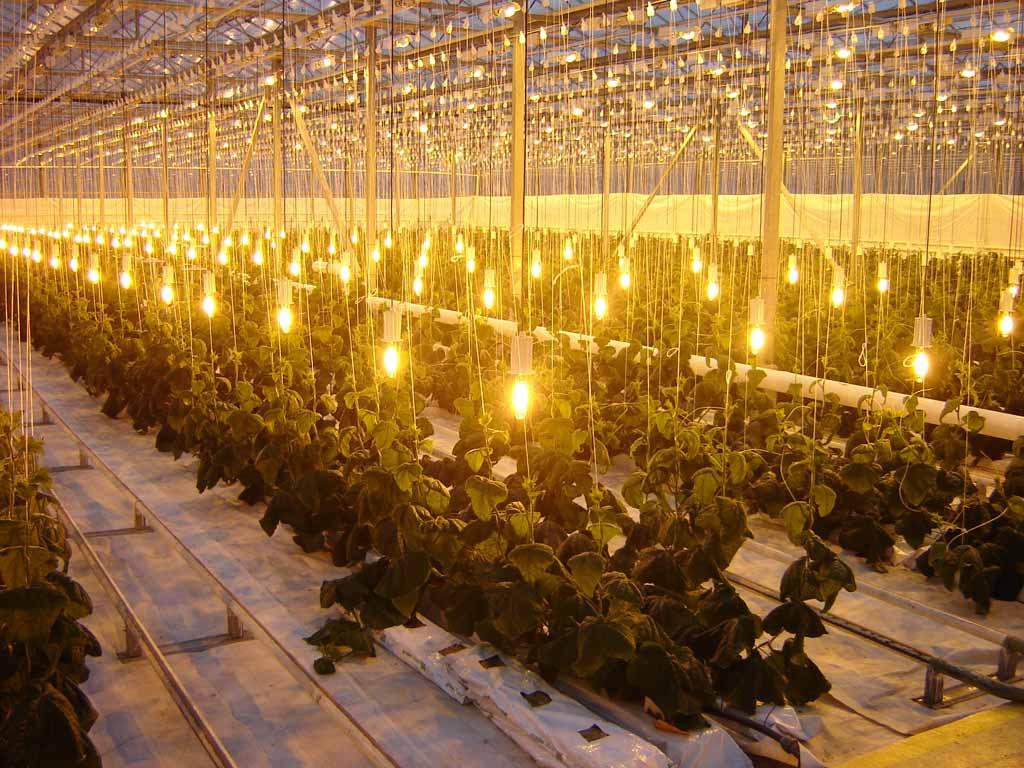 Наилучшие лампы для теплицы, которые можно использовать для досвета растений в разные периоды вегетации