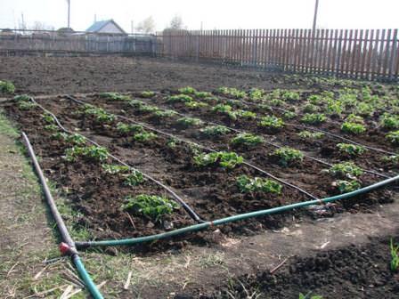 Как, когда и каким способом поливать сад и огород на дачном участке?