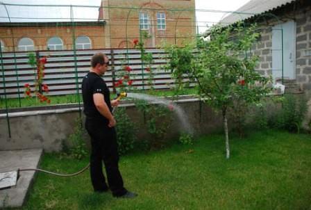 Правильный полив растений на даче должен быть систематическим, в зависимости от требований агротехники
