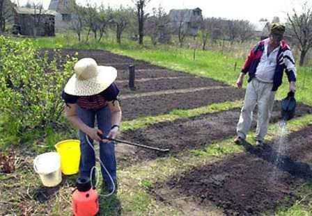 Количество и нормы поливов могут зависеть и от состава почвы, будьте внимательны