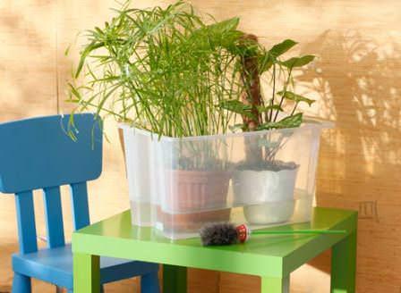 Если нет возможности поливать горшочные растения вовремя, оставляйте их в поддонах с водой