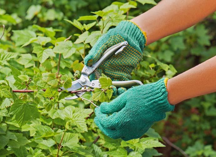 За 2-3 летними растениями необходимо правильно ухаживать