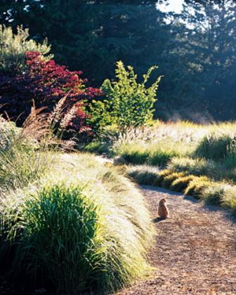 Для естественного вида сада совмещаются высокие и низкие растения