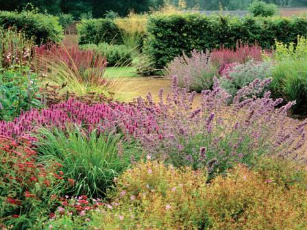 Прерийный сад создается посредством высеивания злаковых растений и многолетних трав
