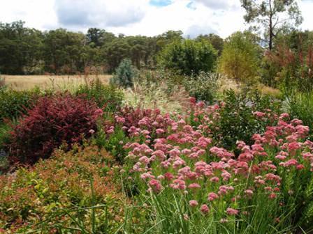Прерийный сад можно назвать «фишкой» современных элементов ландшафтного дизайна