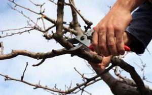 Процедура обрезки деревьев