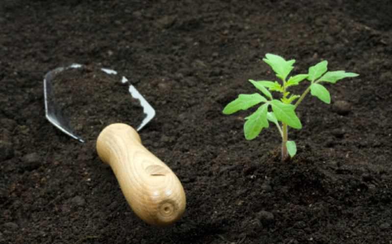 Для каждого вида растений требуется специальный грунт с определённым составом