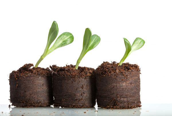 Выращивание рассады в неподходящей таре может пагубно отразиться на росте и развитии растения