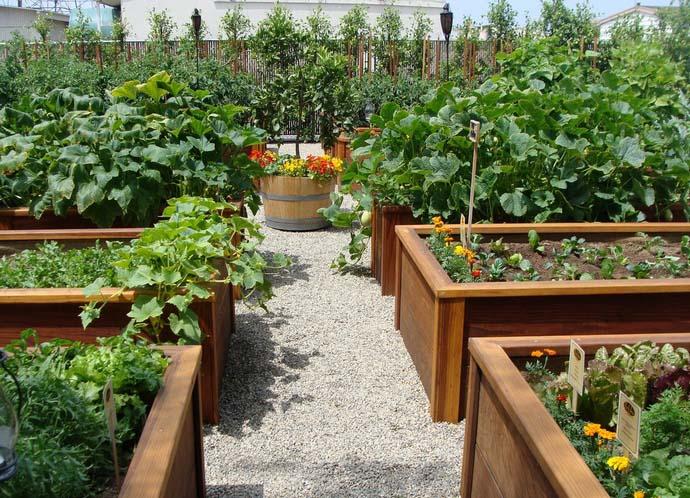 Высокие гряды быстрее прогреваются ранней весной и соответственно больше подходят для выращивания наиболее теплолюбивых огородных культур с продолжительным сроком вегетации