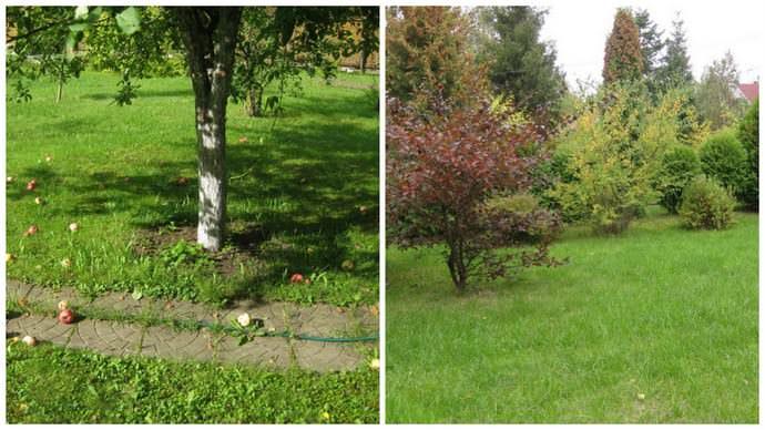 С одной стороны газон, декоративные и плодовые деревья и кустарники, есть огород, с другой стороны — сохранен участок леса, где растут грибы