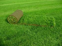 рулонный газон на даче