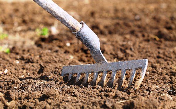 Прежде чем осуществить посев семян весной и вырастить богатый урожай крупного, вкусного и полезного редиса, необходимо грамотно выбрать участок и провести подготовку почвы