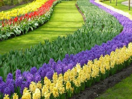 Гуляя по саду