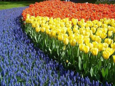 Благоухающие сады
