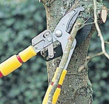 Заботимся о деревьях