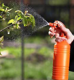 Обрабатывать плодовые деревья весной от вредителей необходимо ежегодно