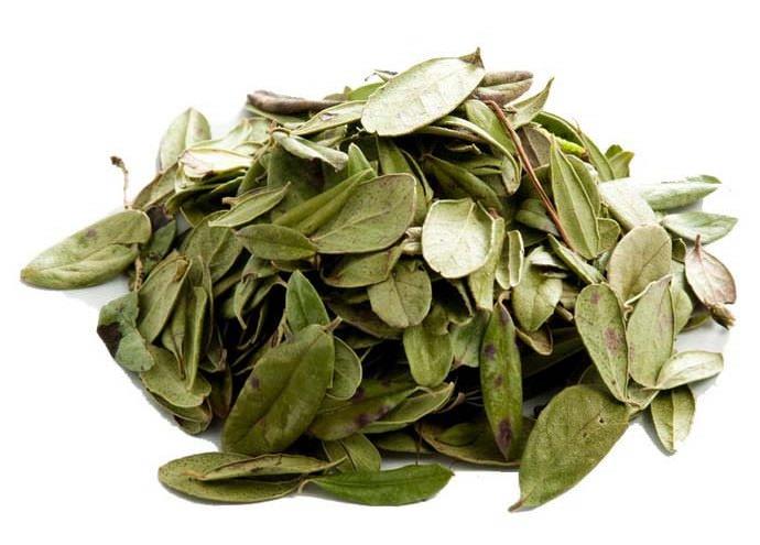 Собранные листья брусники нужно сушить в сухом и хорошо проветриваемом помещении, без попадания солнечных лучей, которые вызывают побурение листьев