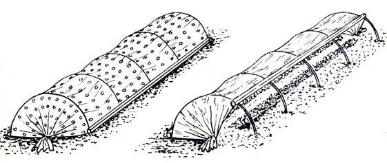 В первых числах ноября, после промерзания садового грунта на глубину не более 3-5 см, рекомендуется обеспечить ягодные насаждения укрытием