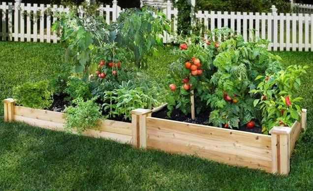 Правильно сделанная теплая грядка очень удобна для выращивания целого ряда овощных культур и зелени