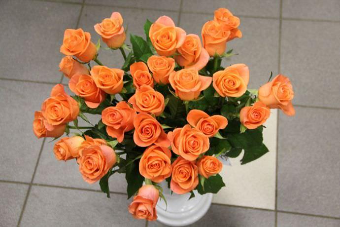 Роза сорта Вау очень хорошо транспортируется, а также способна стоять в вазе порядка двух недель