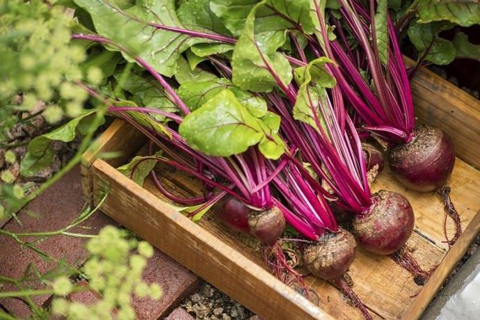 Очень важно периодически пересматривать весь заложенный урожай и выбраковывать поврежденные или пораженные болезнями корнеплоды