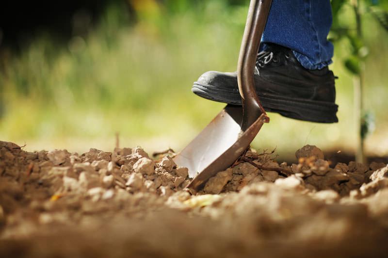 Почву перед высаживанием посадочного материала требуется перекопать на глубину в 40-50 см с рыхлением нижнего глинистого слоя