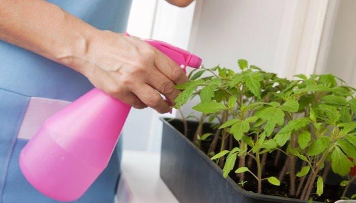 Необходимо следить за тем, чтобы раствор попадал не только на верхнюю, но и на внутреннюю часть листвы