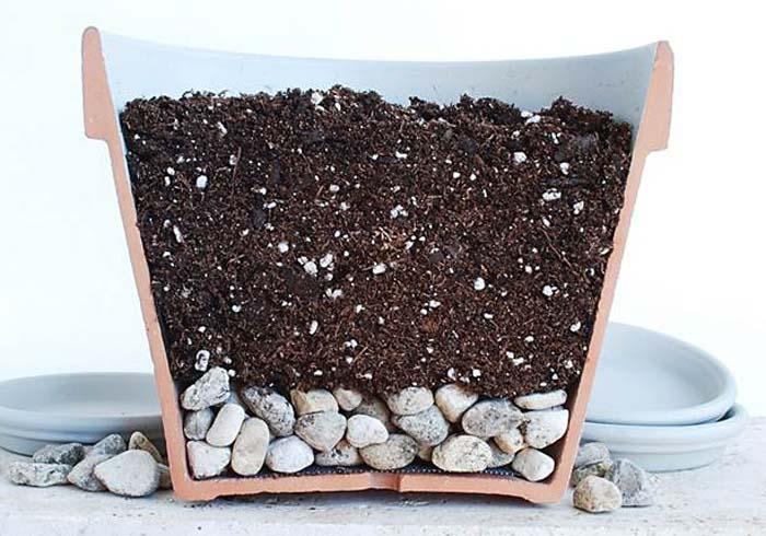 Чтобы правильно пересадить или посадить ложную комнатную пальму, необходимо использовать почвенный субстрат с оптимальными качественными характеристиками