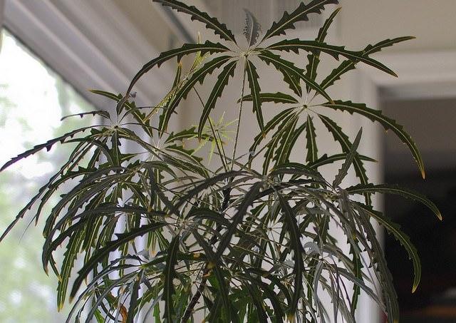 Лучшее место, где стоит установить горшок с растением — окна с западной или восточной ориентацией