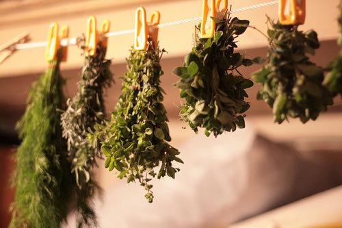 Сушка производится в темном и хорошо проветриваемом, теплом и защищенном от попадания воды помещении или под навесами на открытом воздухе