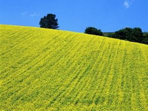 Сидерирование – самый экологичный способ обогащения почвы минеральными и органическими веществами