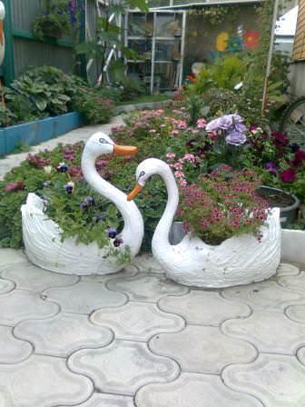 Встреча пары лебедей