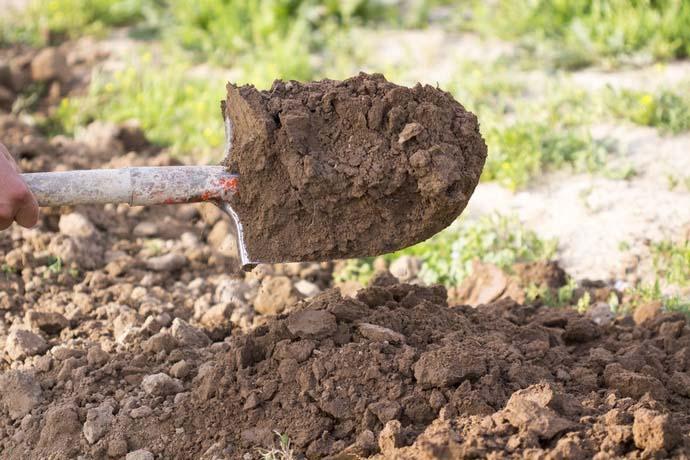 После сбора урожая тщательно перекопайте землю, разбейте крупные комья лопатой и полейте грядки