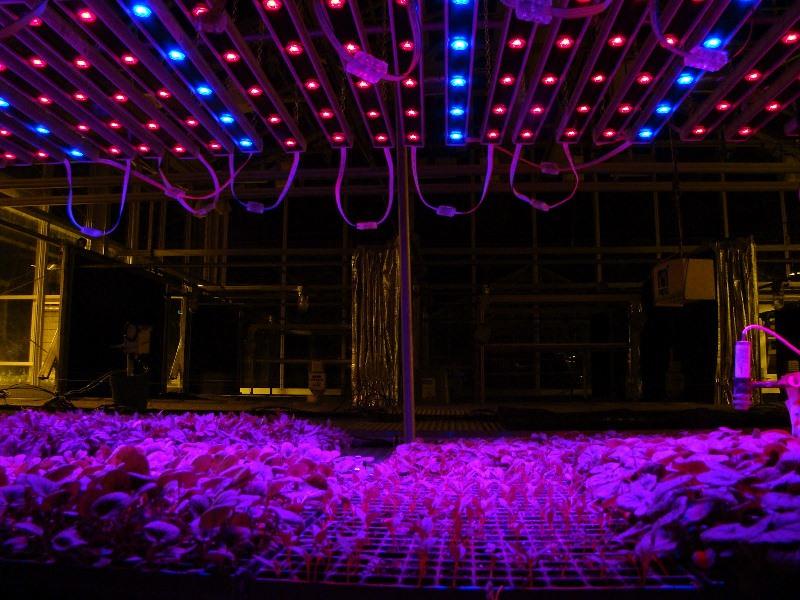 Такие лампы способны создавать необходимый для живых растений спектр света