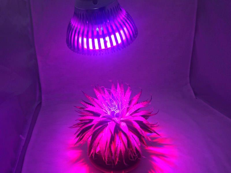 Эти светодиоды созданы специально для освещения растений