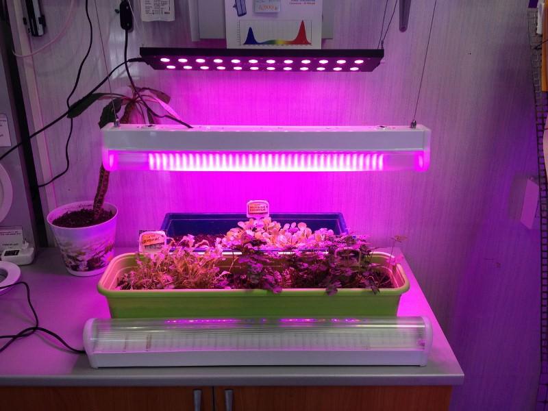 Под действием этих лучей вода и углекислый газ в растениях преобразуются в органические вещества, необходимые для их роста