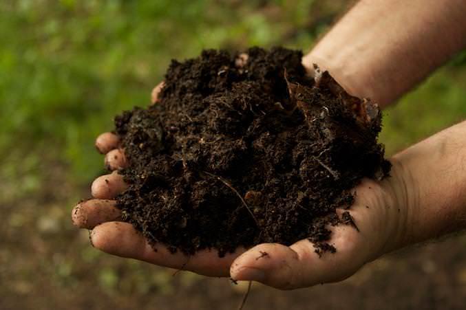 Каждый вид растений требует особого состава грунта